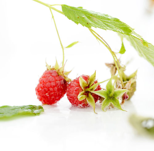 berry Berries Berry Food Fresh Fruits Harvest July Organic Organic Food Raspberry Red Sour Cherry Summer