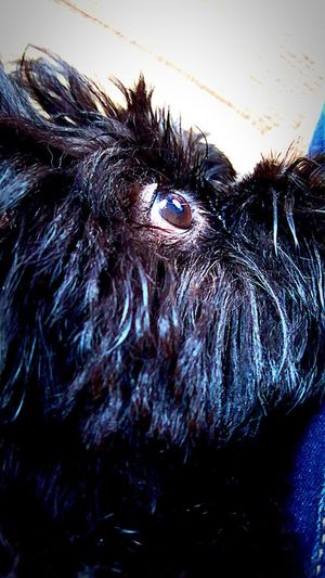 Lhasa Apso Puppies One Animal Animal Themes Animal Hair Mammal Domestic Animals Dog Pets Close-up No People Day