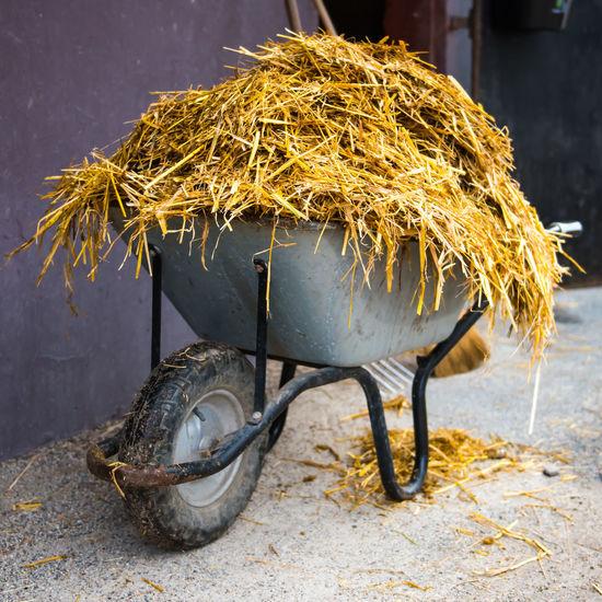 Barrow Grass Standing Wheel Wheelbarrow Animal Themes Day Farming Go-west-photography.com Handbarrow Horse Horse Theme Manure No People Outdoors Pushcart Yellow
