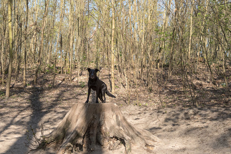 Dog in a forest