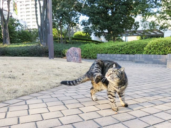 Stray Cat Cat Lovers Cat Watching Cat Animals