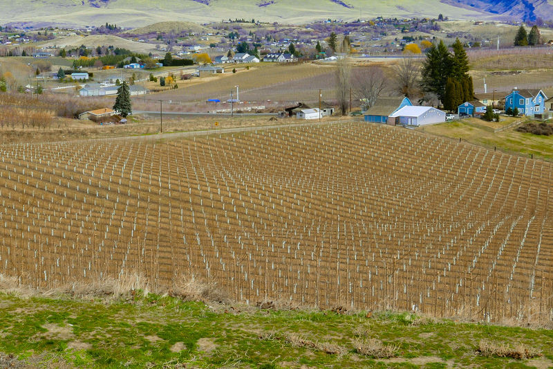 Evergreen Trees Orchard Layout Orchard Symetery Young Orchard Young Pear Trees Agriculture Blue Barn Crop  Day Farm Field Growth Landscape Nature No People Outdoors Pear Trees Rural Scene Village View EyeEmNewHere