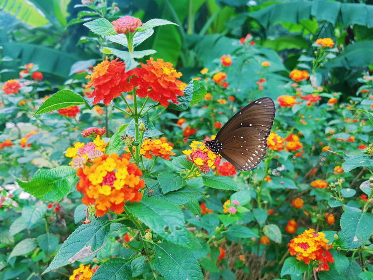 Buterfly 🌺🌺🌺 Flowers Floral Green Yellow Flower Red Fall Colors Autumn🍁🍁🍁 Nature VSCO Vscophoto Vietnam Trip Vietnamphotography