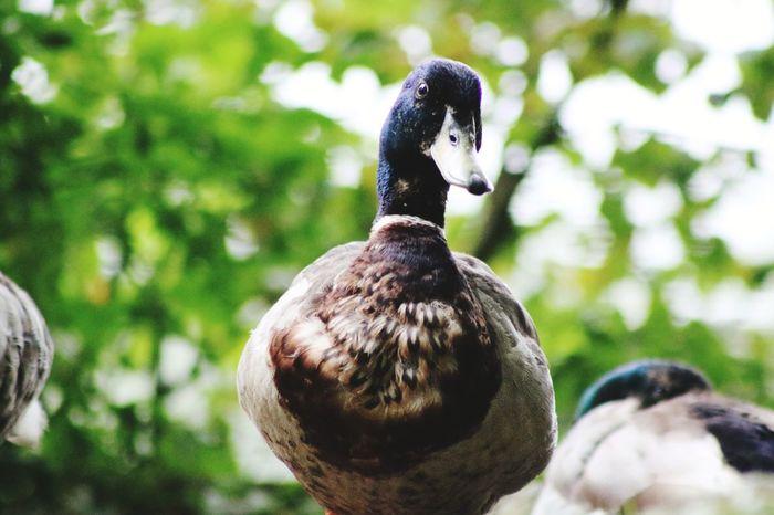 EyeEm Selects Bird Beak Water Peacock Feather Close-up