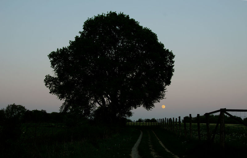 Beauty In Nature Full Moon Growth Landscape Late Evening Sky Nature No People Outdoors Road Scenics Silhouette Single Tree Landscape Sky The Way Forward Tranquil Scene Tranquility Transportation Tree Vollmond