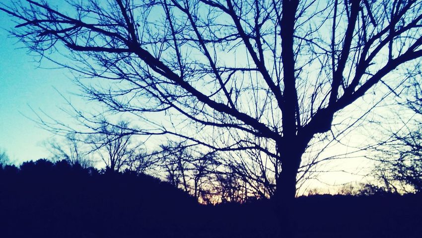 Sunset asheville nc Tree Bare Tree Sky Outdoors Nature Beauty In Nature Enjoy The New Normal Tranquil Scene