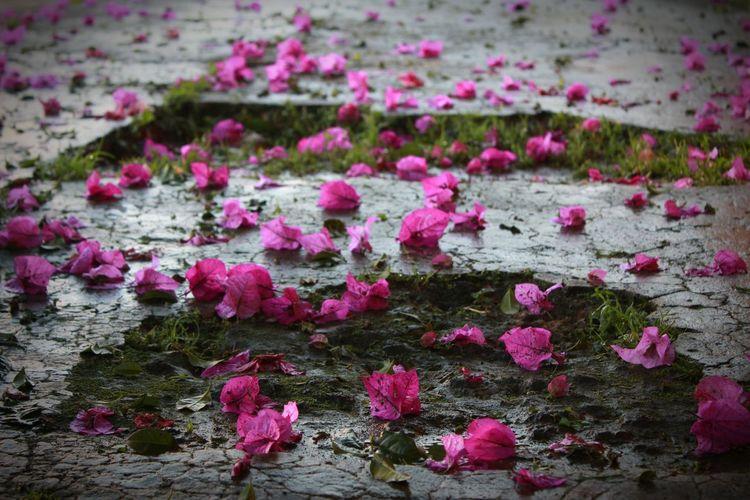 flores en pavimento Floor Whith Flowers Flowers Fucsia Color Fucsia Flowers Bugambilia Bouganvillea
