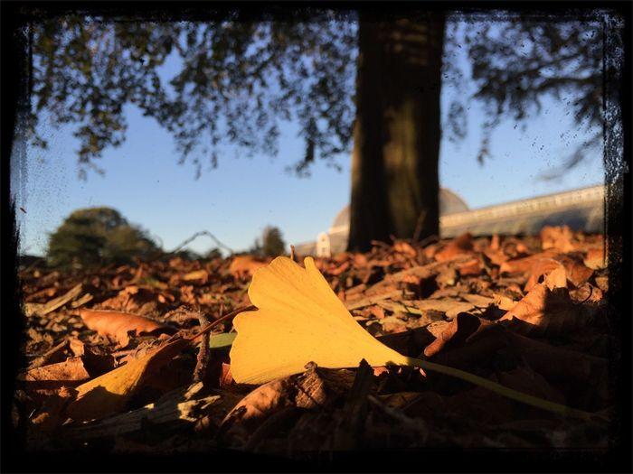 Leaf Autumn Low Angle Colors
