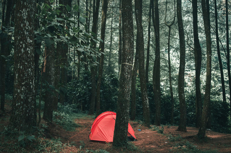 Holiday Travel Adventure Beauty In Nature Branch Camping Day Forest Growth Landscape Nature No People Outdoors Pine Tree Red Scenics Tent Tranquil Scene Tranquility Tree Tree Trunk Wilderness WoodLand