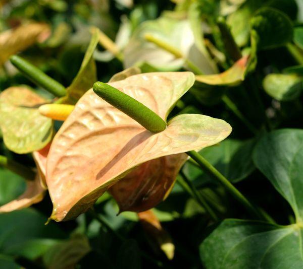 Flower Head Flower Leaf Close-up Plant Green Color