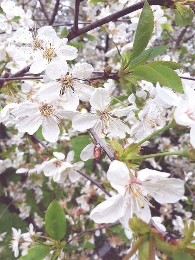 Springtime Spring2015 Tree_collection  EyeEm Best Shots - Trees