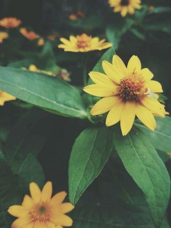 EyeEm Selects Sky Flower Leaf Petal Fragility Flower Head Freshness Beauty In Nature