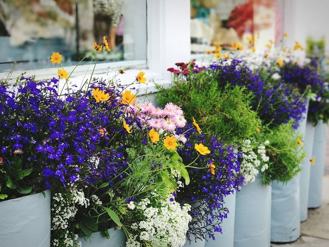 Beautiful flower containers on Cape Cod. Summertime Summer Capecod Capecodimages Flowers Potted Flowers Container Gardening Windowbox Fresh Flowers