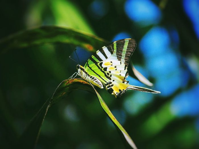 if you love me, please take care of me. Butterfly is a Beautiful and Colourful Insect Northborneo sabah Malaysia Gansau