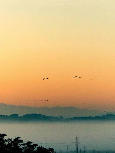 Fantastic Sunset Bird Sky Beauty In Nature Flying Scenics - Nature Vertebrate
