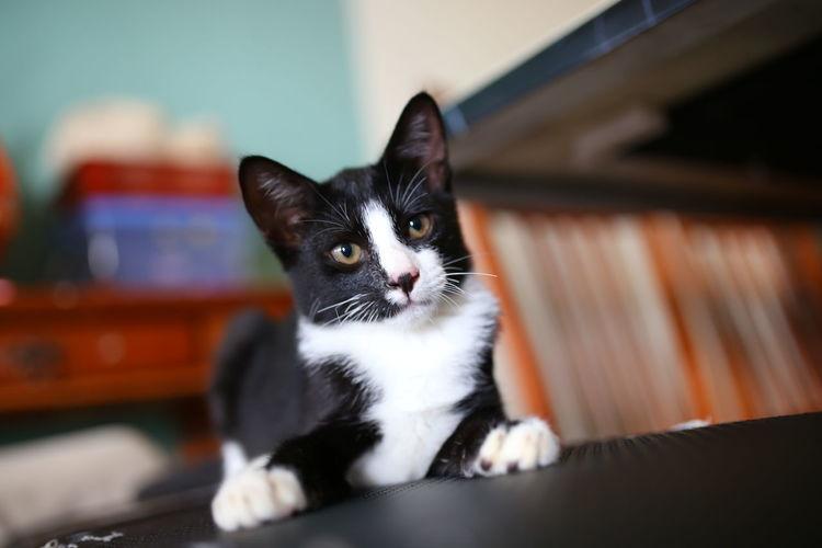 Portrait of kitten