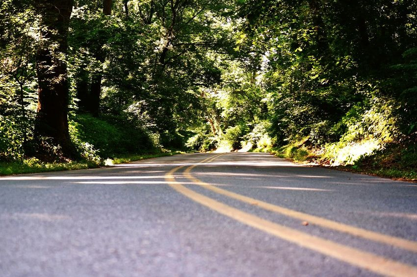 Old River Road in Pennsylvania Summertime Enjoying Life Exploring Outside Loving Life  Outside No People Loving Nature's Beauty Beauty In Nature Trees Hot Summer Days Pretty Colors Curvy Road Shadows Yellow Lines In The Road Around The Corner