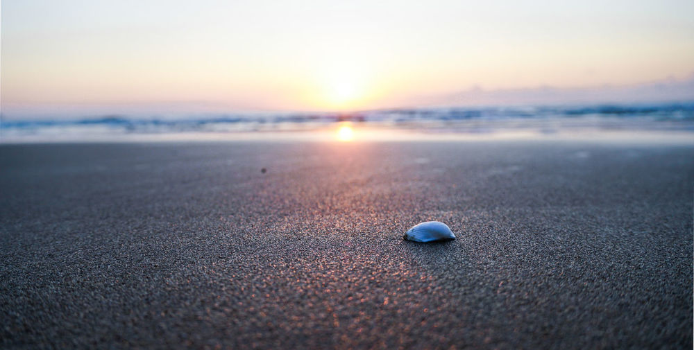 Close-up of shell on beach against sky during sunset