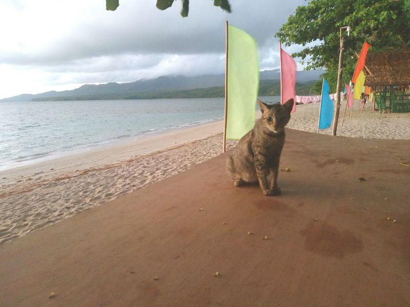 Sand Sea Animal Outdoors Sky Cat By The Beach