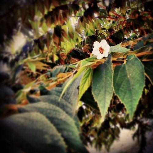 Monday = work! Flower Workerbees Momsbackyard Macro love