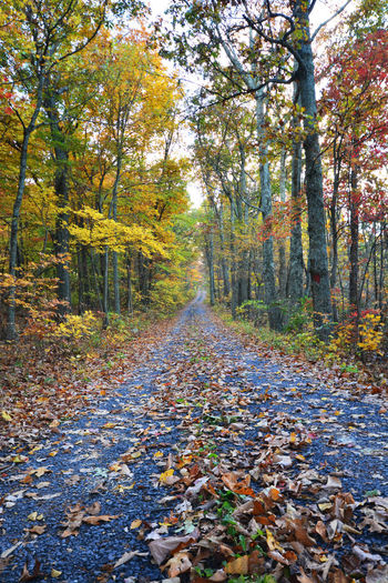 Shanandoah Autumn Beauty In Nature Branch Change Day Deciduous Tree Forest Landscape Leaf Multi Colored Nature No People Outdoors Road Scenics Single Lane Road Sky The Way Forward Tranquil Scene Tranquility Tree Tree Trunk Wilderness Area WoodLand