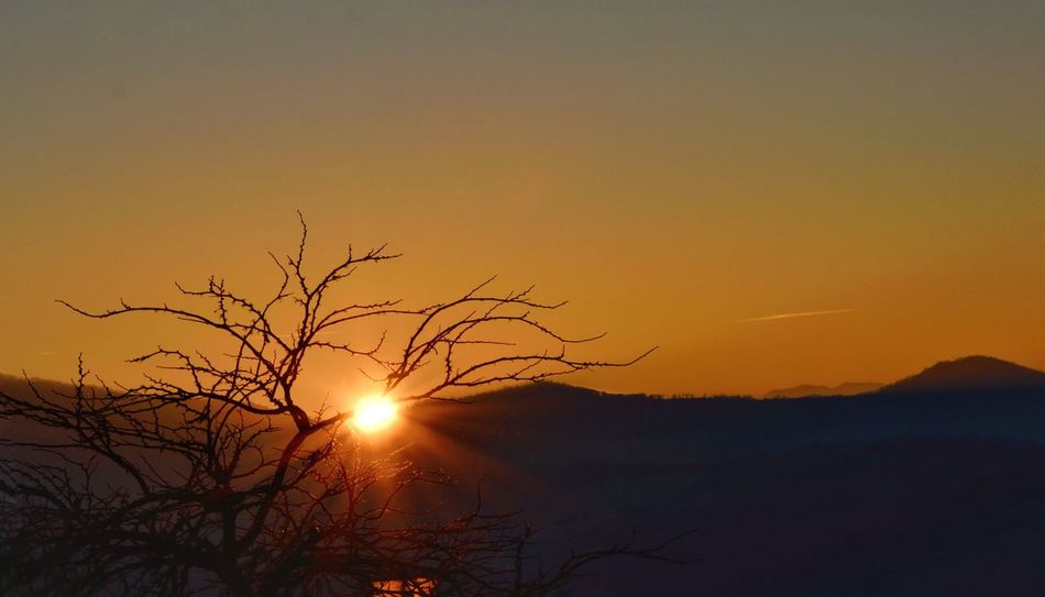 Sunset Sun Silhouette Orange Color Tranquility Sky Beauty In Nature Idyllic Nature Sunbeam No People Refraction Outdoors Day Nikon Trees And Sky Tree Sunset Silhouettes Sunsets Sunlight And Shadow Sun Ligth Sun Rays Behind The Tree Sunraycatcher Sunset Hunter Tree Silhouette