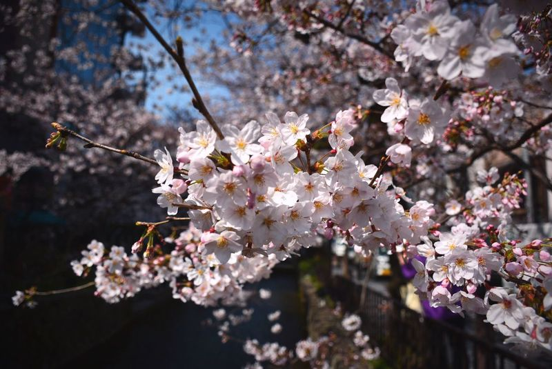 Nikon D7100 Taking Photos 河原町 京都 祇園 四条 阪急乗り場近く