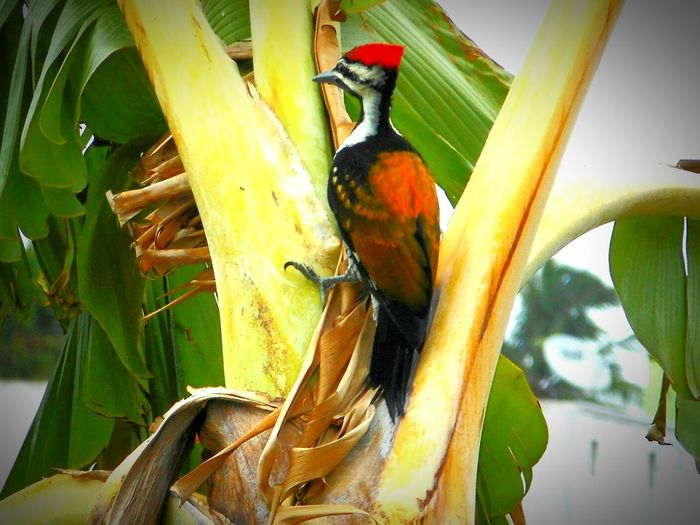 Nature Taking Photos Popular Photos Tree And Sky Check This Out Birds Woodbird Vilankurchi Nature On Your Doorstep