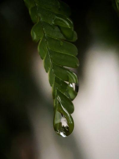 raindrop on a