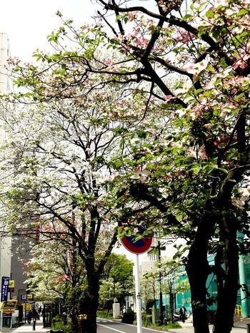 Springtime Street Photography Trees Roadside Tree Enjoying Life Relaxing