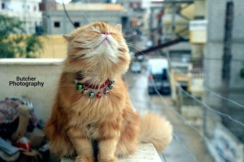 my cat love Fresh Air Pets Dog No People Animal Themes Domestic Animals First Eyeem Photo