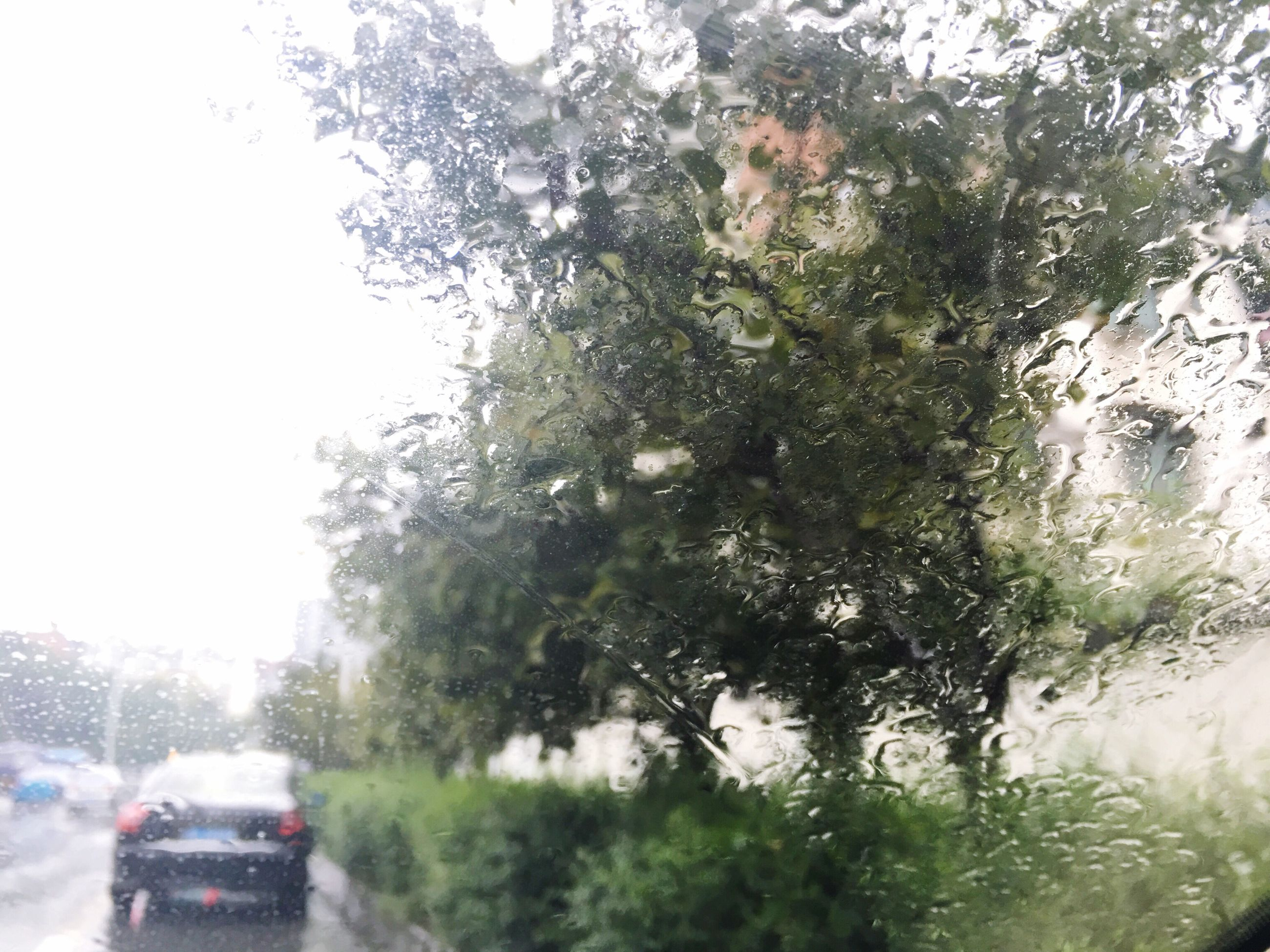 transportation, car, land vehicle, mode of transport, road, tree, rain, on the move, window, glass - material, water, travel, transparent, rainy, nature, day, tail light, green color, the way forward, city life, journey