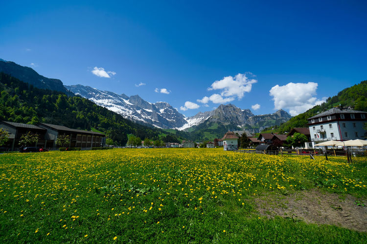 beautiful engelberg town and village Field Flowers Mount Titlis Switzerland🇨🇭 Vacations Alps Architecture Beauty In Nature Building Building Exterior Built Structure Day Engelberg Environment Field Flower Flowering Plant Growth House Land Landscape Lavender Mountain Mountain Range Nature No People Outdoors Plant Rejuvenation River Rotary Scenics Scenics - Nature Sky Snow Sunny Day Travel Destinations Truebsee