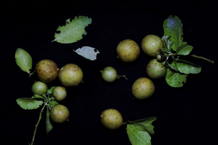 High angle view of fruits growing against black background