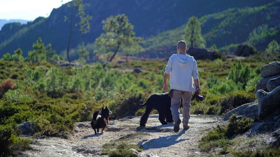 The walk Animal Themes Beauty In Nature Day Dog Dog Lead Domestic Animals Full Length Lifestyles Mammal Mountain Nature One Animal One Person Outdoors People Pets Real People Rear View Tree Walking