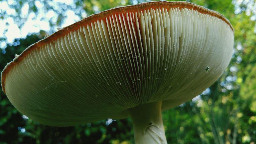 Foret Champignon Champignons Mushrooms Mushroom Nature Nature Photography