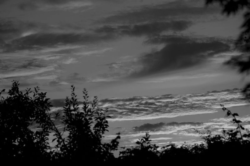 Sunset cloud formations in black and white. Sky Cloud - Sky Cloudscape Dramatic Sky Romantic Sky Shape Pattern Textured  Nature Beauty In Nature Scenics - Nature Environment Meteorology Tranquility Tranquil Scene Sunset Plant Tree Growth Branch Leaves No People Plant Part Sunlight Shadow Silhouette Backgrounds Dusk Outdoors Low Angle View Focus On Background Full Frame Rural Scene Non-urban Scene Atmospheric Mood