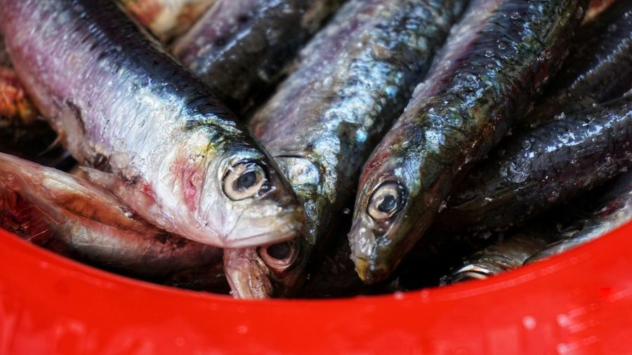 Close-up of fish for sale in market. sardines