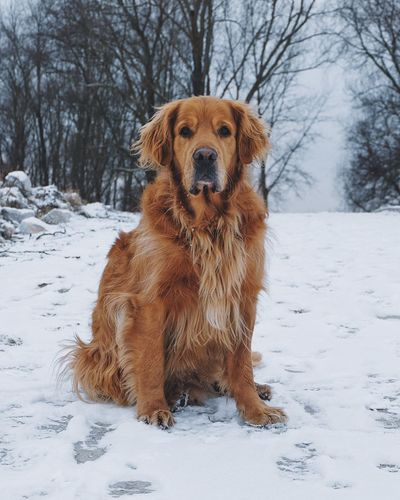 Winter Snow Cold Temperature Weather Mammal Animal Themes Dog Pets Domestic Animals Looking At Camera Field Nature Outdoors Frozen No People Day Portrait EyeEm Best Shots Vscocam Fujifilm_xseries