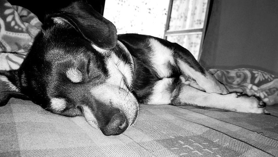 Elkü Elküzo Dog Doglovers DogLove Welcome To Black HuaweiP9 OO