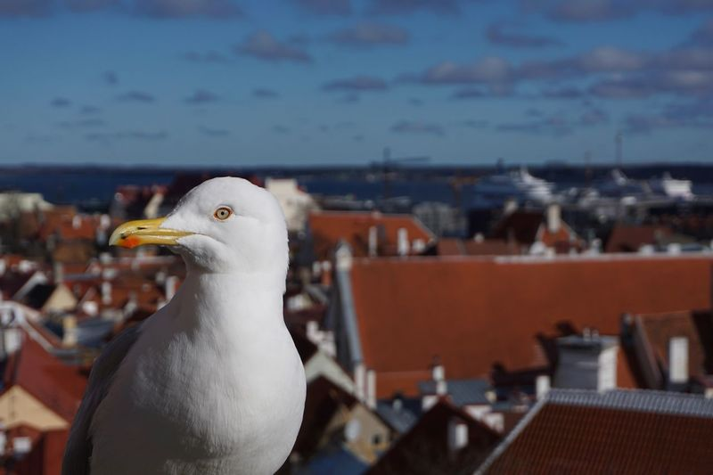 Bird Animal Themes Animal One Animal Animals In The Wild Vertebrate Animal Wildlife Focus On Foreground Architecture Sky Nature Building Exterior Sea Seagull City Day Water