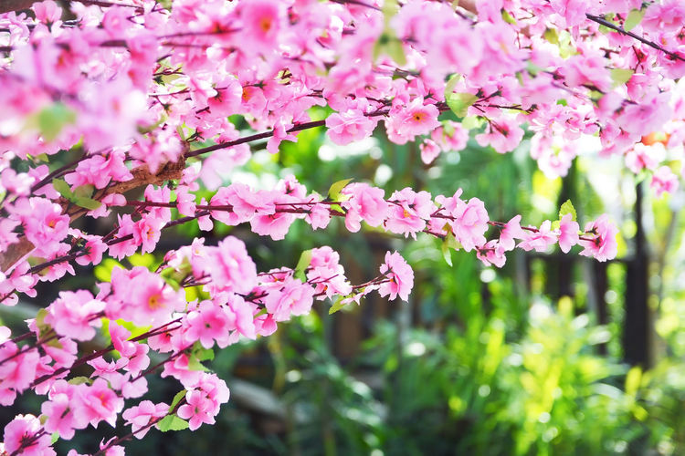 Sakura Background Artificial Flower Pink Blossom Cherry Fake Japanese  Spring Blooming Beautiful Decoration Nature White Natural Fresh Bright Floral Branch Petal Tree Beauty Plastic Garden Plant Summer Bloom Season  Japan Flora Closeup Decorate Fabric Park Green Colorful Design Style Leaf Oriental Color Interior Zen Flowers Red