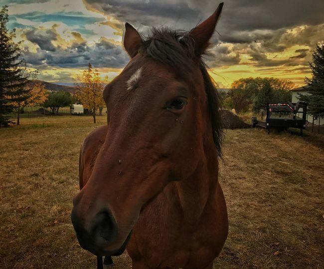 Horse No People Close-up Farm Life Outdoors Hardwork