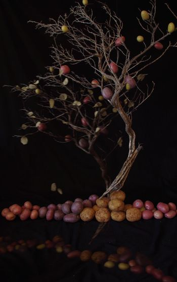 Close-up of grapes growing on tree at night