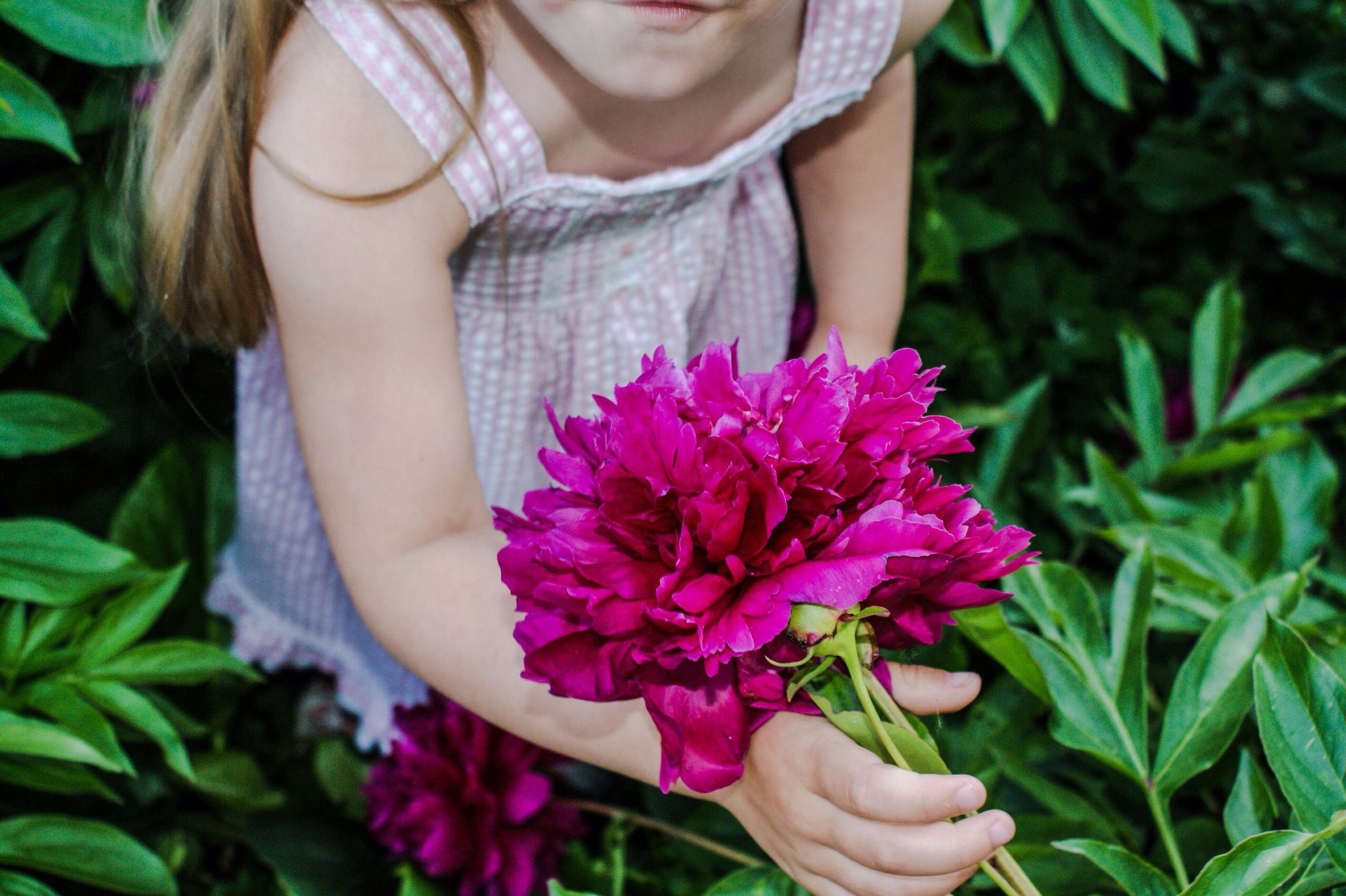 flower, freshness, midsection, front view, holding, petal, leaf, fragility, close-up, lifestyles, beauty in nature, young women, nature, person, casual clothing, young adult, focus on foreground, pink color, plant, pink, flower head, growth, long hair, bouquet, outdoors