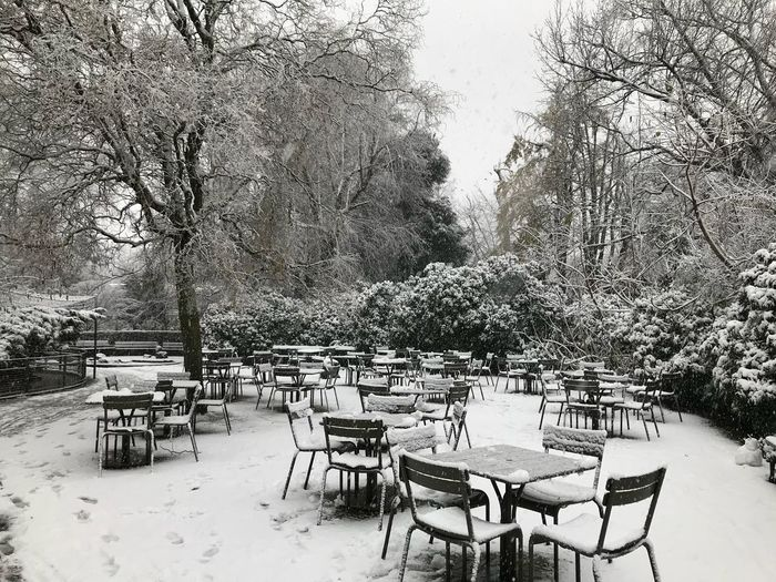white Snow ❄ Seat Chair Plant Tree Table Absence No People