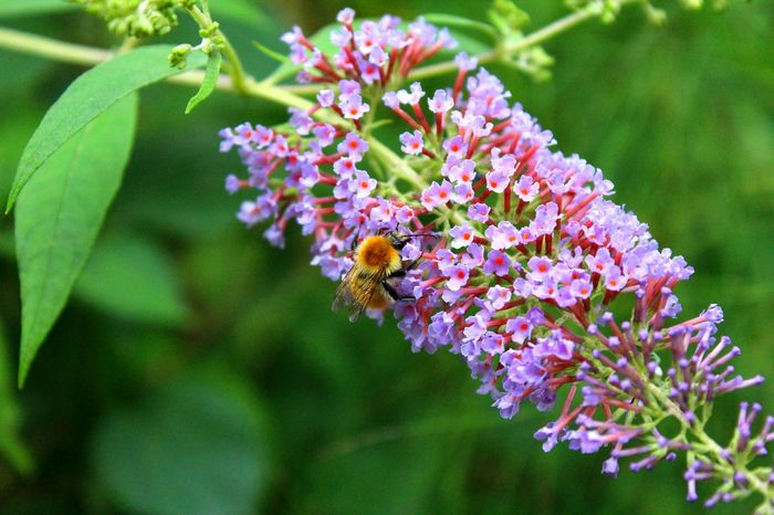 Flower Nature Growth Plant Fragility Freshness Beauty In Nature Insect One Animal Animals In The Wild Purple Animal Themes Outdoors No People Pollination Day Animal Wildlife Close-up Bee Flower Head Garden Beautiful Perfect Nature Summer Nature