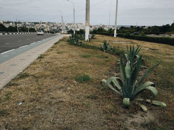 Belgorod Traveling Travelphotography Cityscapes Cactus Panorama Enjoying The View On The Road