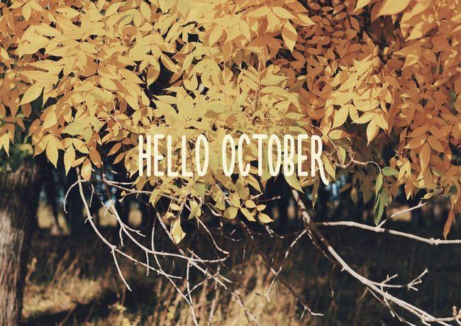 October Autumn Hello World