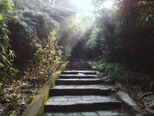 🌞💜😍😍 To Travel Sunshine Trees Stairways Beautiful ở Tây Thiên Pagoda Vĩnh Phúc Vietnamese First Eyeem Photo